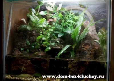 Флорариумы, палюдариумы, орхидариумы и прочие - 745.jpg