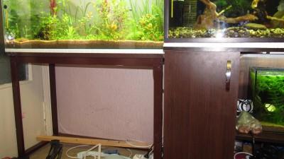 Заселение 50 литрового аквариума - image5.jpg
