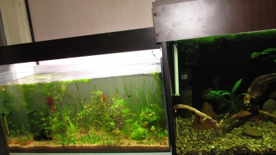 Заселение 50 литрового аквариума - image3.jpg