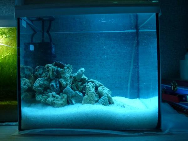 Все про морской аквариум - P1090008.JPG