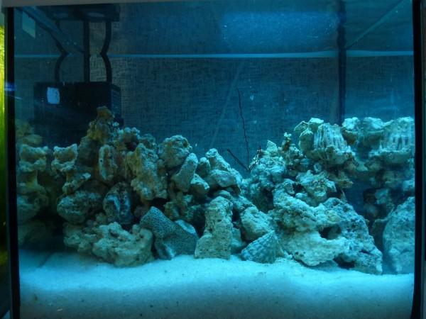 Все про морской аквариум - P1090009.JPG