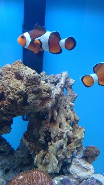 Все про морской аквариум - DSC_0579.JPG
