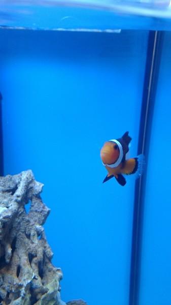 Все про морской аквариум - DSC_0583.JPG