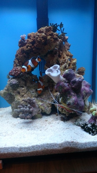 Все про морской аквариум - DSC_0585.JPG
