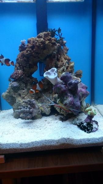 Все про морской аквариум - DSC_0586.JPG