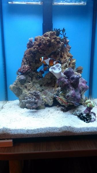 Все про морской аквариум - DSC_0587.JPG