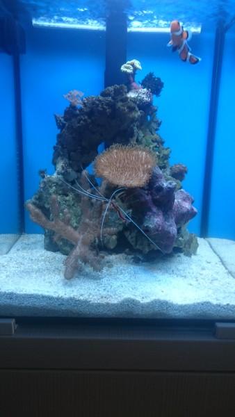 Все про морской аквариум - DSC_0426.JPG