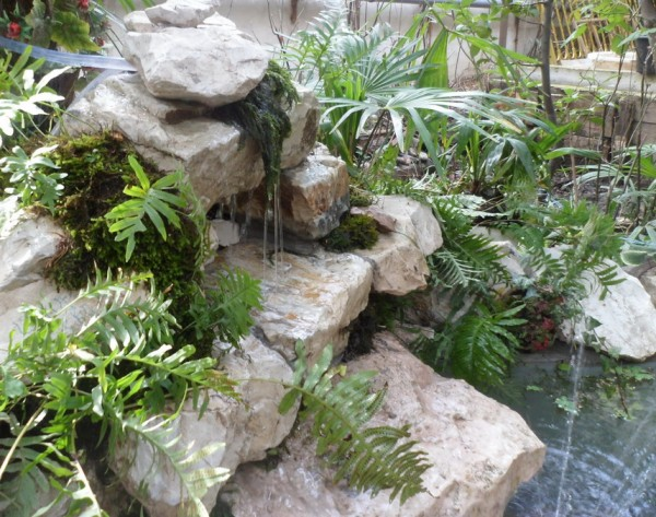 Мини аква-пруд (Адлер) - SAM_0789.......jpg