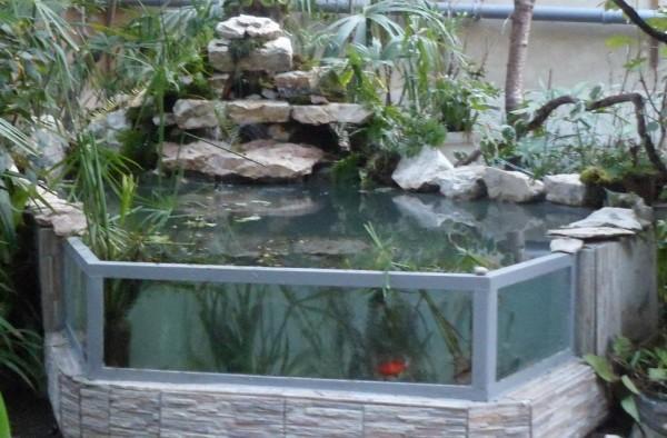 Мини аква-пруд (Адлер) - SAM_0737...........jpg