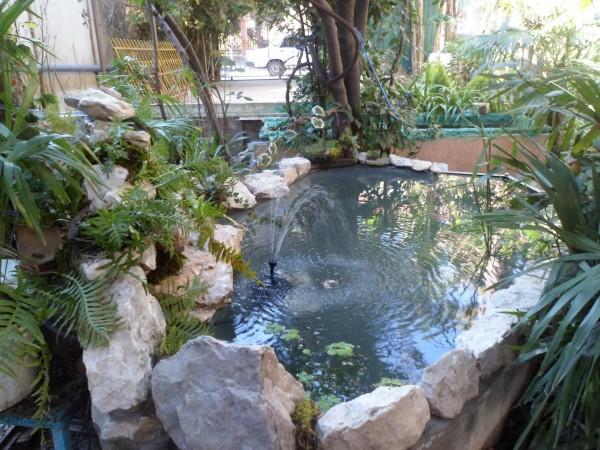 Мини аква-пруд (Адлер) - SAM_0725.......jpg